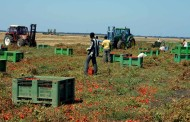 Lavoratori stranieri nei campi: sfruttamento e violazioni dei diritti umani lo caratterizzano