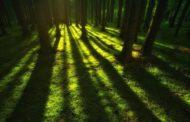 """Le """"green light"""" che salvano i migranti nei boschi della Polonia"""